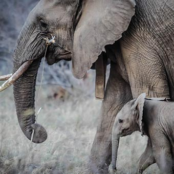 éléphants à Johannesburg